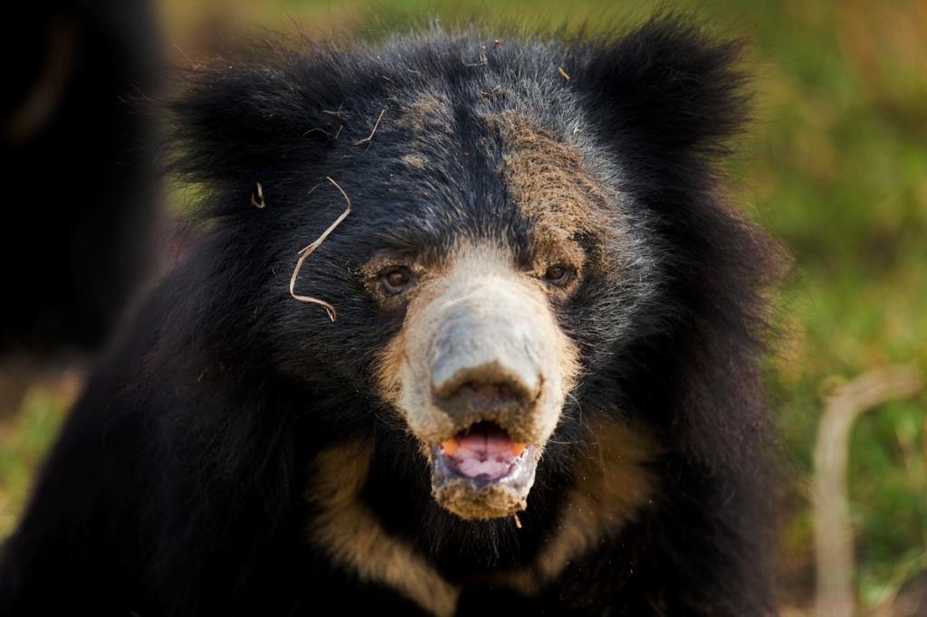 Bear_13
