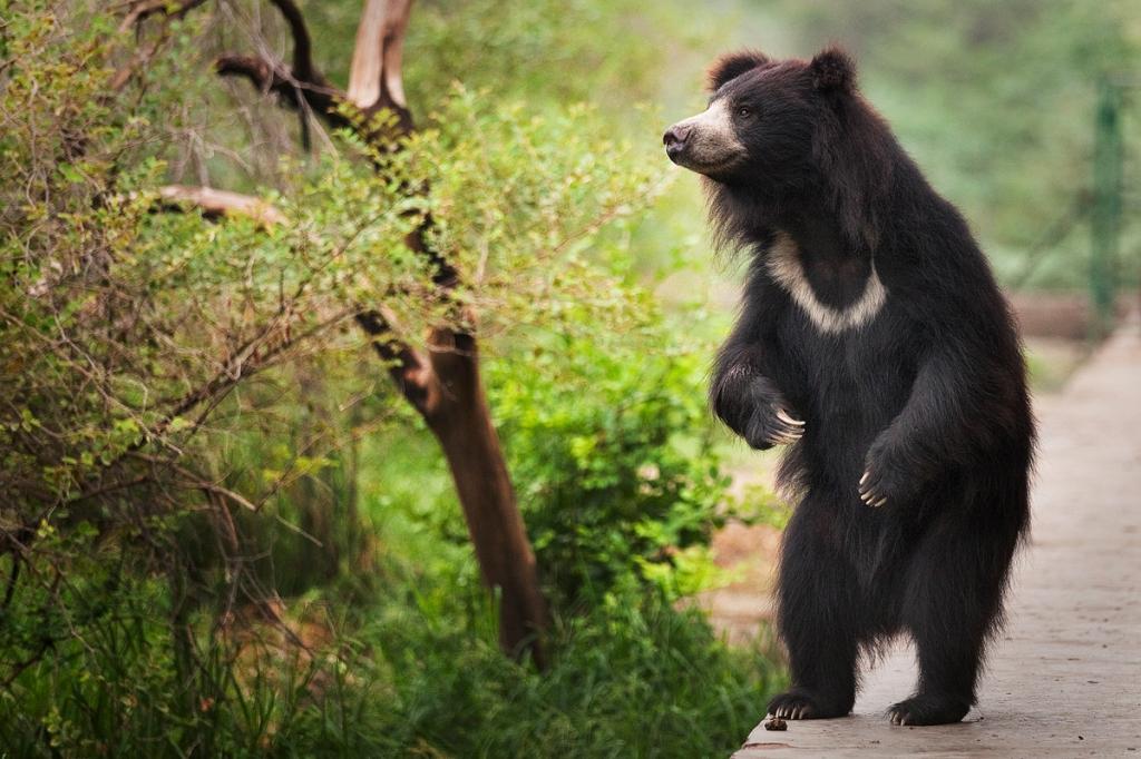Bear_15
